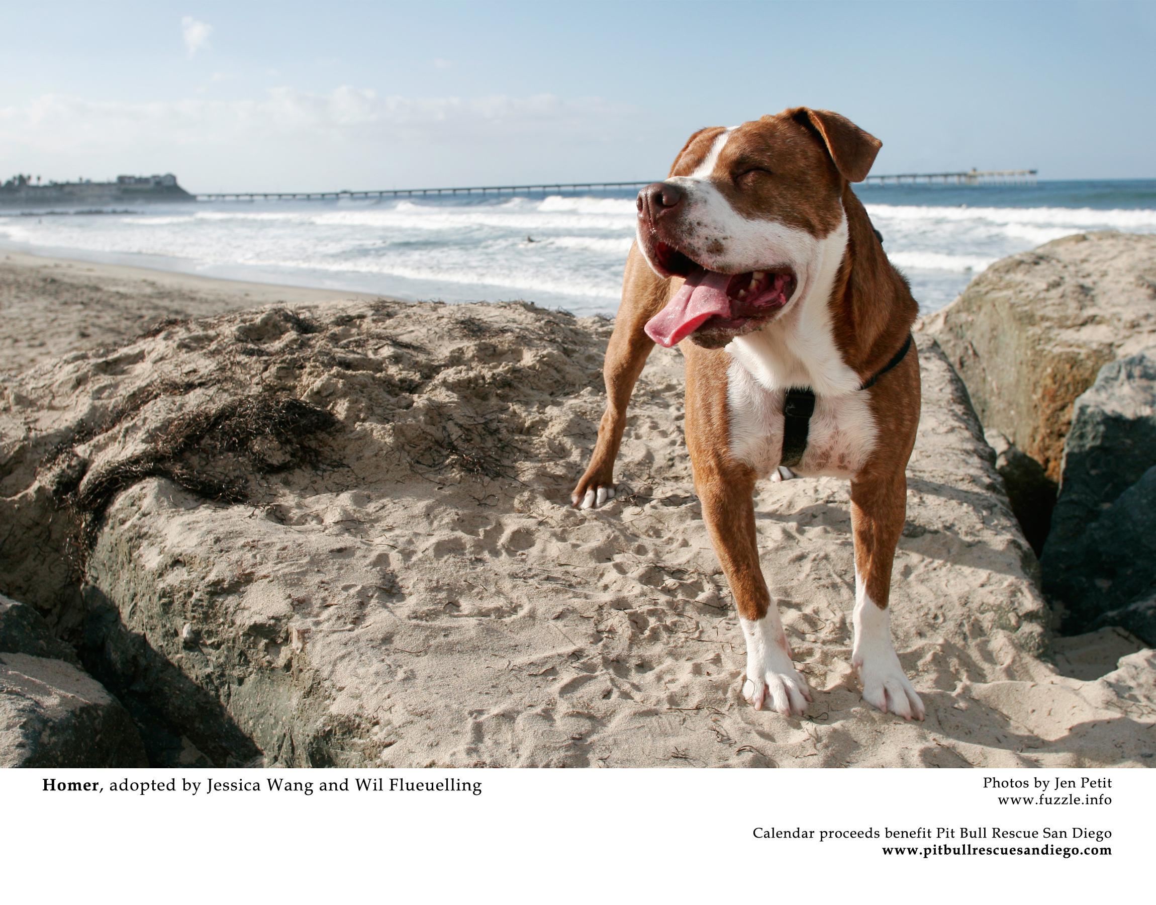 Pit Bull Rescue San Diego Calendar
