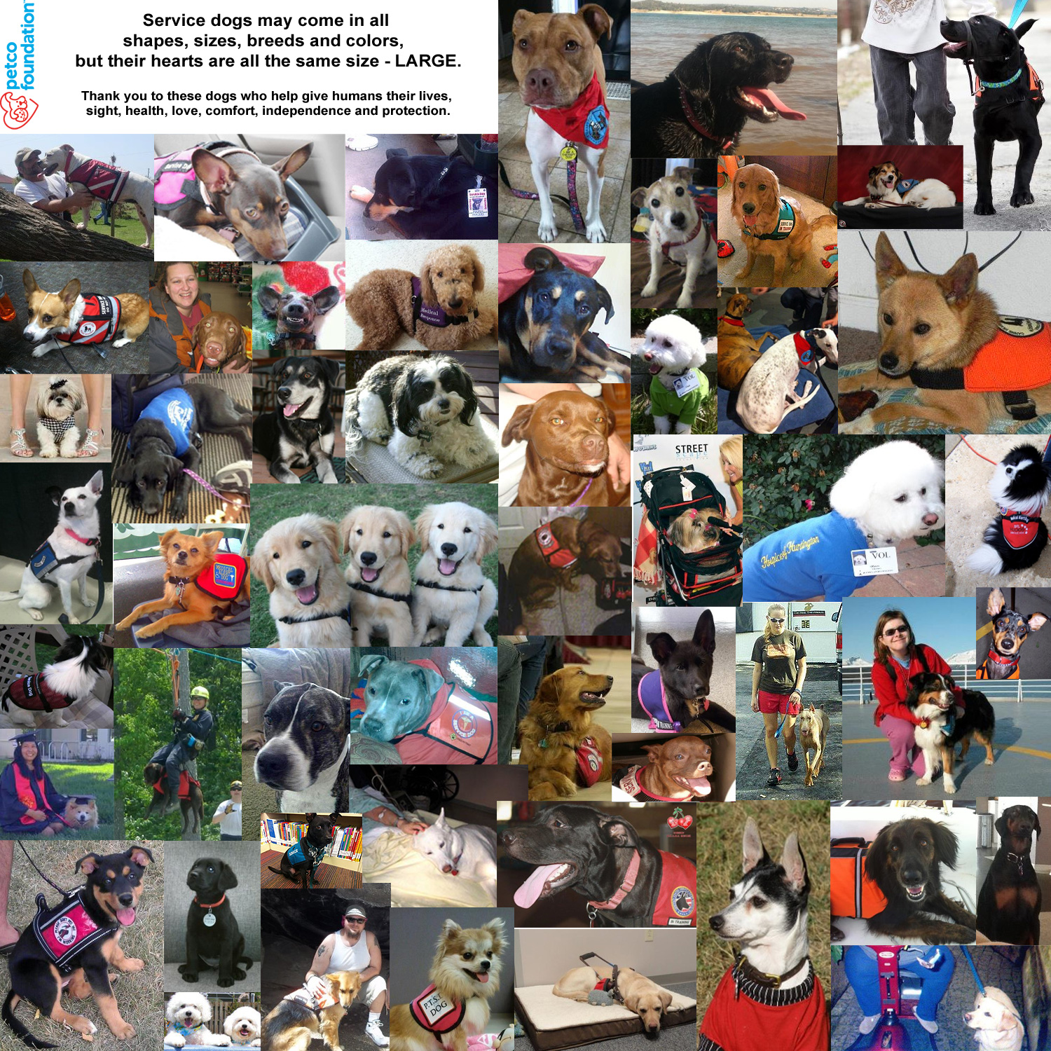 Petco Foundation Social Media Post