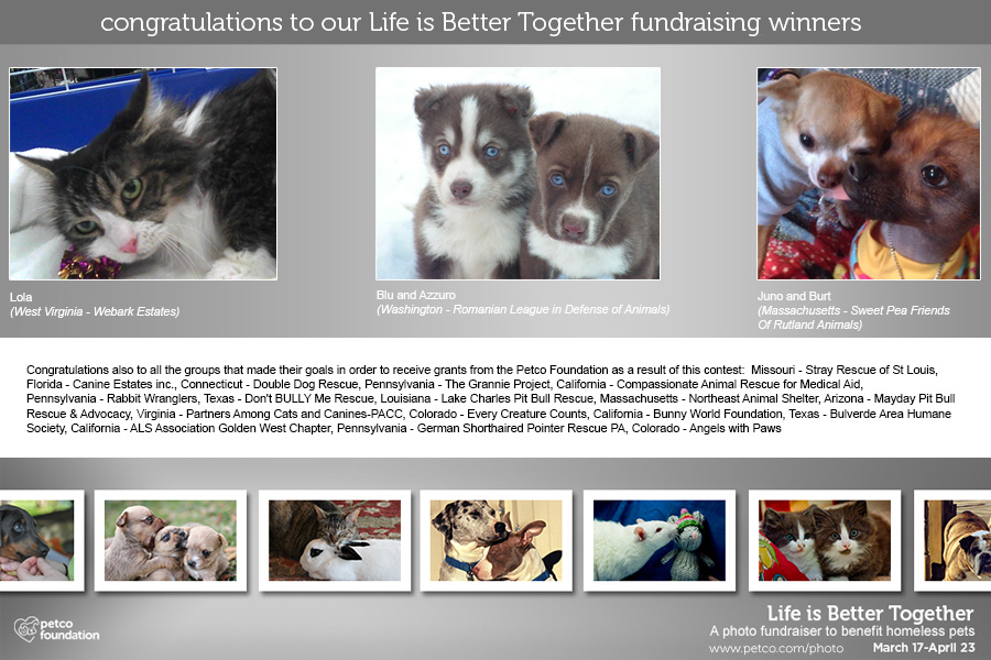 Petco Foundation Life is Better Together