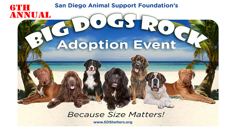 Big Dogs Rock Adoption Event Branding